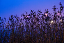 Colorful Night Sky Over A Lake, Winter In Masuria Lake District. Swamps Overgrown With Reeds. Poland