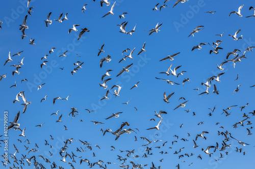 Fotografija cielo de madrid invadido por gaviotas del lago de la casa de campo al fondo el c