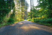 A Lonely Road In The Middle Of The Woods On A Sunny Summer Morning