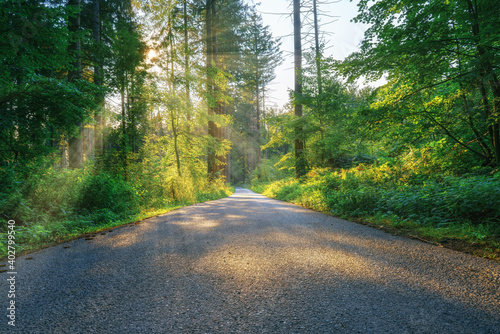 Foto A lonely road in the middle of the woods on a sunny summer morning