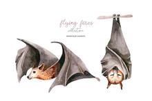 Watercolor Cartoon Flyinf Fox. Sleeping Black Fruit Bat Hanging On On Tree Branch And Flying Bar. Nursery Halloween Illustration. White Background.