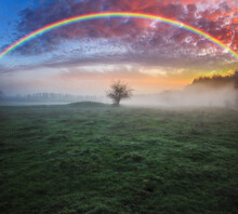 Rainbow Over A Meadow In The Spring