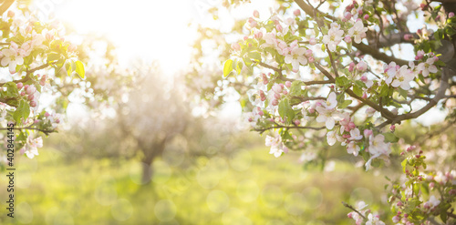 Fotografia Abstract spring background of blossoming tree