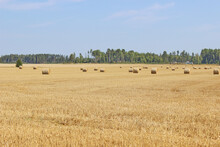 Hay Bales And Field Stubble