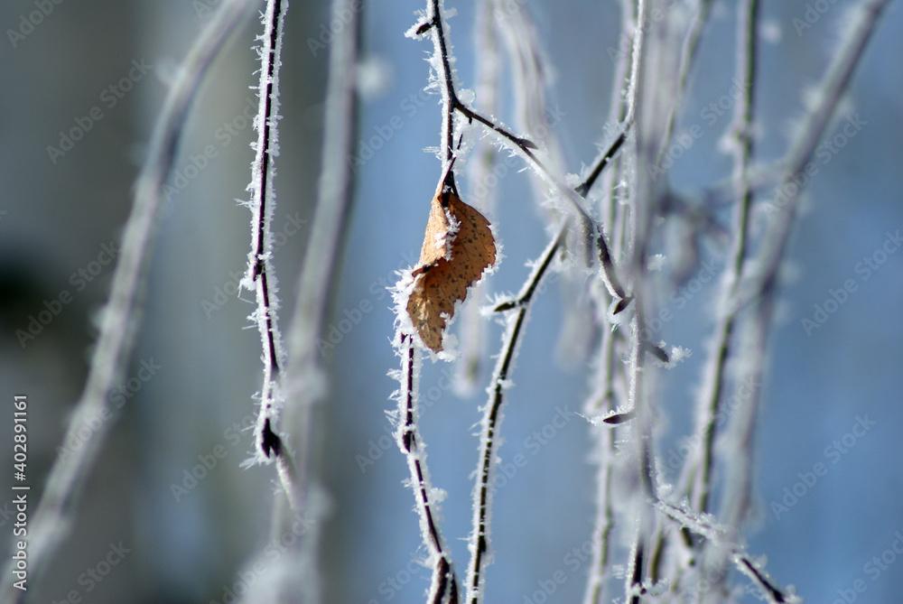 Fototapeta Jesienny liść na oszronionej gałęzi w lesie