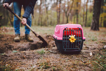The Topic Of Burial Of Pets Is Not Legal. Man Digs Hole With Shovel For Burying An Animal In The Forest. The Owner Makes The Grave With A Shovel, Digs A Hole In The Ground To Bury The Deceased Cat