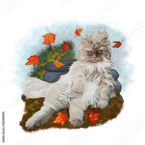 Obraz na plátně Simpatico gatto seduto nel vento. Dipinto
