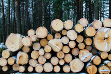 A Pile Of Lumber In A Pine Forest In Winter