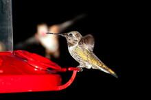 Hummingbird Landing On A Feeder