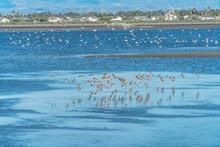 Flock Of Birds Flying Over Of Bolsa Chica Nature Reserve In Huntington Beach