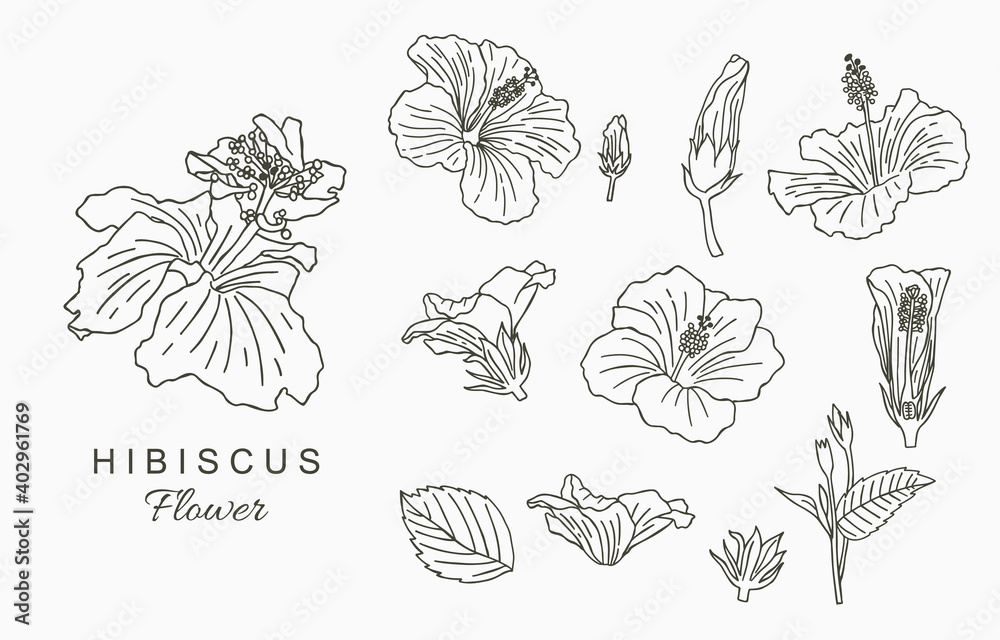 Fototapeta Line flower collection with hibiscus.Vector illustration for icon,sticker,printable and tattoo