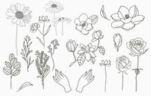 Line Object Collection With Hand,magnolia,rose,lavender,jasmine,sunflower,leaf,flower