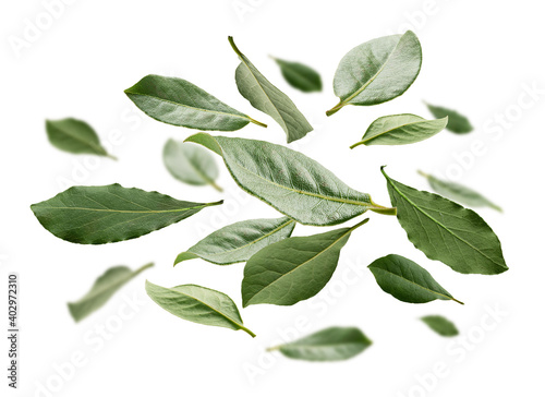 Fototapeta Green Bay leaves levitate on a white background obraz