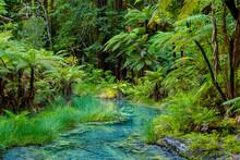 Redwoods Forest Walk In Rotorua, New Zealand