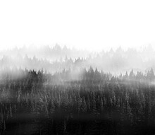 Foggy Treescape