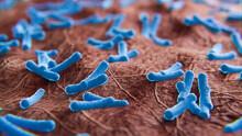 Bakterien Auf Organischem Untergrund: 3D Visualisierung