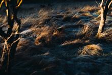 Frosty Grass  Field In The Sunlight