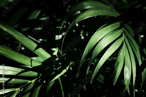 tropical leaf texture, foliage nature green palm background