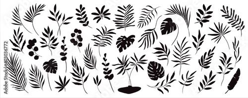 set of hand drawn modern tropical exotic leaves and branches silhouette isolated on white background - fototapety na wymiar