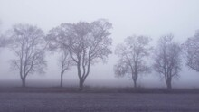 Flying Parallel To Trees Growing In Line Along A Dirt Road. Dreamy Fall Countryside Shrouded In Dense Fog And Almost Colorless. Low Aerial, Left To Right Pan.