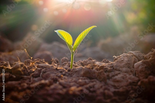 Canvas Growing plant,Young plant in the morning light on ground background, New life concept