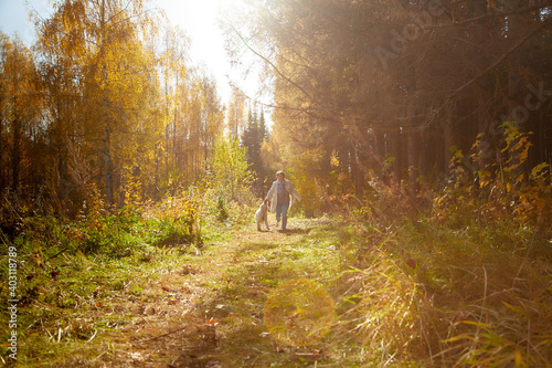 Fototapeta A plump woman with a white Labrador dog walking in a Park or forest on a Sunny autumn day. obraz na płótnie