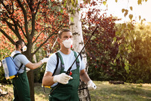 Workers Spraying Pesticide Onto Tree Outdoors. Pest Control