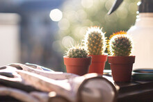 朝日の中のミニサボテンと園芸用具のガーデニングイメージ