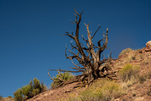 Moon Peeks Through Branches Of Gnarly Dead Tree