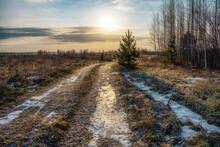 Path In The Field. Sunlight Falls On The Ice-covered Road And It Shimmers Beautifully With Yellow Sparkles. Sunrise Awakens Nature, Trees And Grass. First Night Frost, Autumn Will End Soon