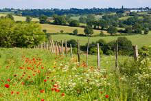 Paysage En France, Nature, Vallonnée Et Prairie Fleurie.