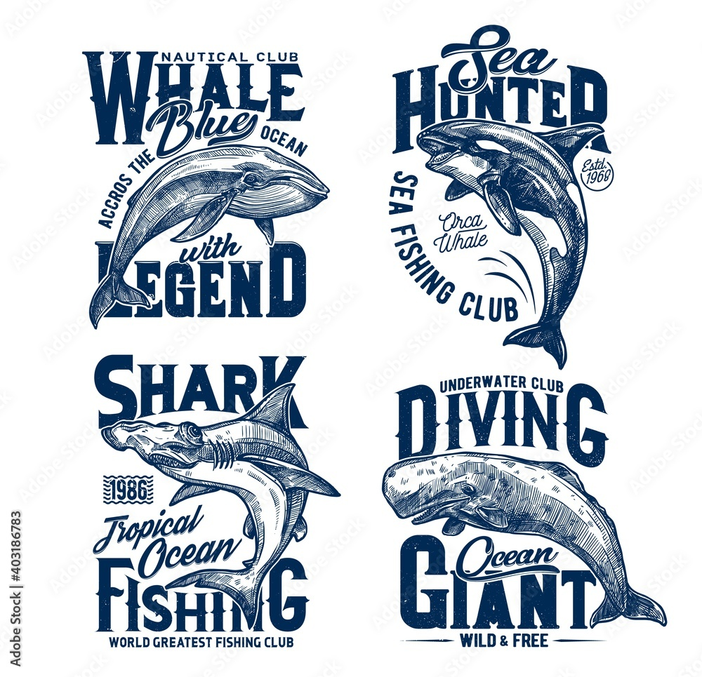 Fototapeta Tshirt prints with hummer head shark, killer and blue whales, vector mascots for fishing, diving or marine club. Sea predator animals, ocean adventure team prints with typography on white background