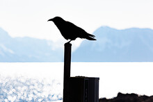 Silhouette Of A Raven Sitting Atop A Post In Front Of Bay And Mountains.