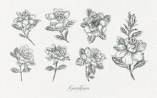 Gardenia Flower Line Art Illustration Hand Drawn Assets