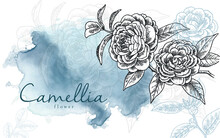 Realistic Hand Drawn Camelia Flower Illustration With Elegant Watercolour Background