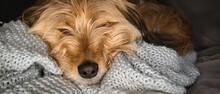 Portret Domowego Pupila. Pies Najlepszym Przyjacielem Człowieka.