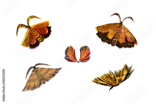 Fotografie, Obraz Set golden furry authentic moths and butterflies isolated on a white background