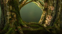 Forest Gates. Old Thick Mossy Trees With Crooked Branches And Roots Composed As Magical Doorway Into The Woods
