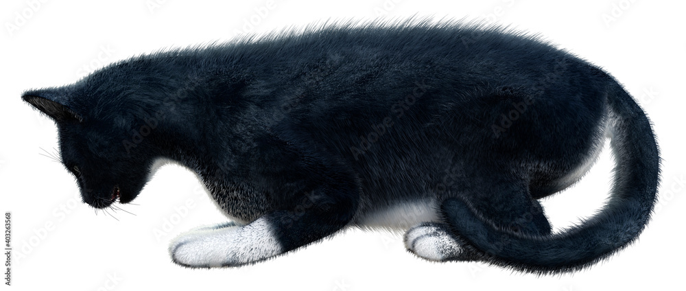 Fototapeta 3D Rendering Black Cat on White