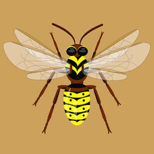 Wasp Illustration Isolated On Beige Background, Vector Graphics