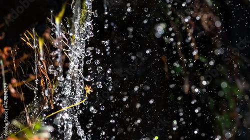 Fotografía Drops of Splashing Water Raining Down on the Autumn Vegetation