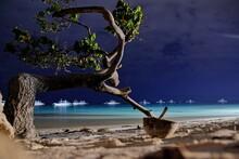 Night Photo Of Bent,  Solitaire Tree, Growing On The Edge Of Mindanao Sea, On Dumaluan Beach Located On Panglao Philippines Island