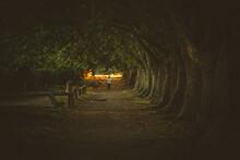 Un Túnel Y Una Escena De Terror Invaden La Imagen. Una Luz Cálida Al Final Del Camino Ilumina Y Contrasta La Penumbra Del Lugar.