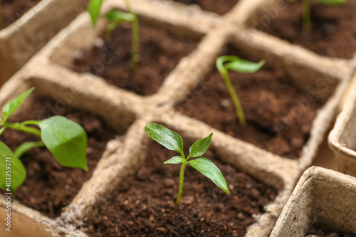 Peat pots with soil and green seedling, closeup