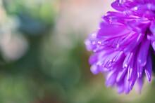 Violet Purple Flower Petals Close Up With Copy Space.