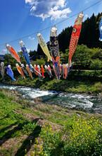 五月の日本・青空に舞う鯉のぼり / 広島県廿日市市吉和