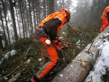 Forstarbeit, Unfall, Forstunfall