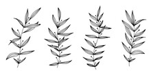Vector Hand Drawn Set Of Various Silhouette Branches With Leaves On The White Background. Elements Design For Fabric, Wrapping Paper And Web.