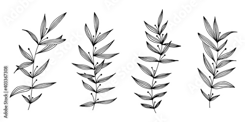 Stampa su Tela Vector hand drawn set of various silhouette branches with leaves on the white background