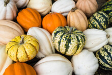 Colourful Gourds & Pumpkins On Sale In An Amish Store In Tennessee